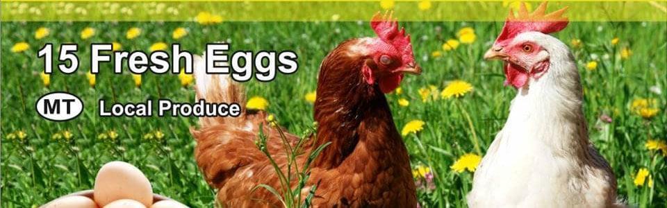 San Gakbu Farm Eggs In Zebbug Malta Yellow Malta